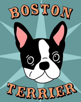 Boston Terrier Pet Dog Picture Starburst Pop Art Print